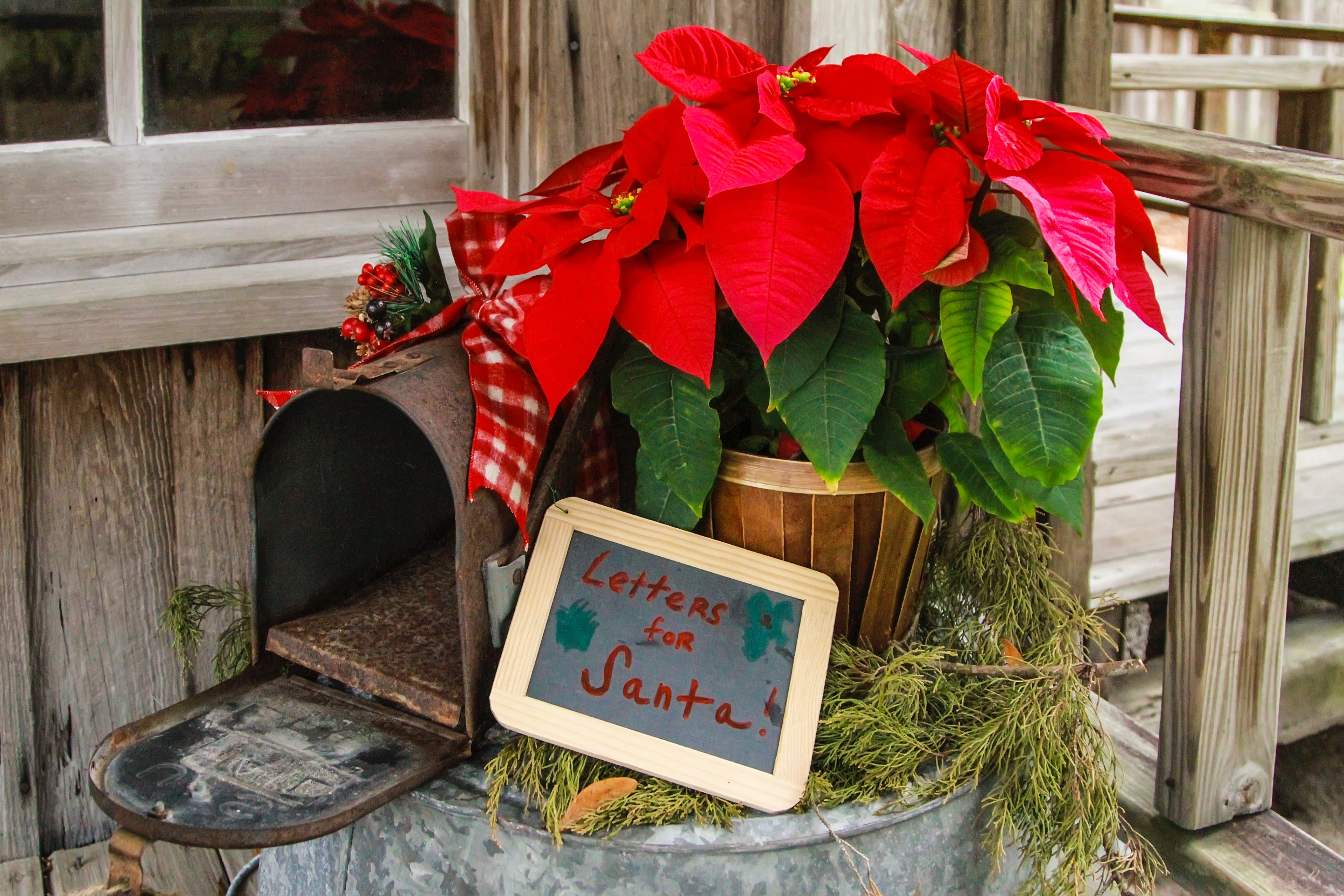 Blog Sending Your Holiday Greetings Through Flowers